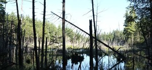 Foy PP - mountain swamp   North of trail and other swamp.