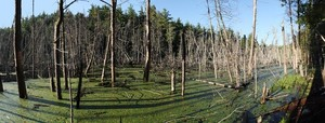 Foy PP - Mountain swamp   Swamp past end of trail.
