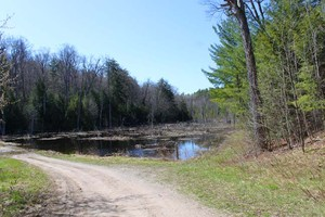 Basswood road pond | A good spot for Red-shouldered Hawk and Barred Owl.